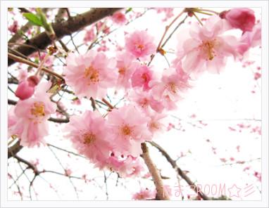 Photo10171666201104105